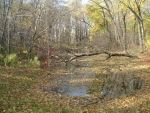 Large pond in late fall 2001