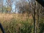 Marsh vegetation - fall 2001