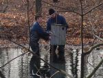Volunteers moving the wood duck nest box - December 2001